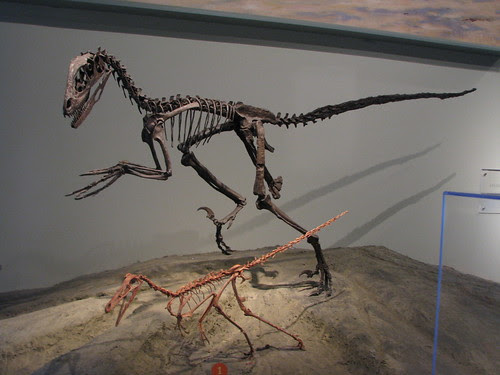 Deinonychus and Buitreraptor