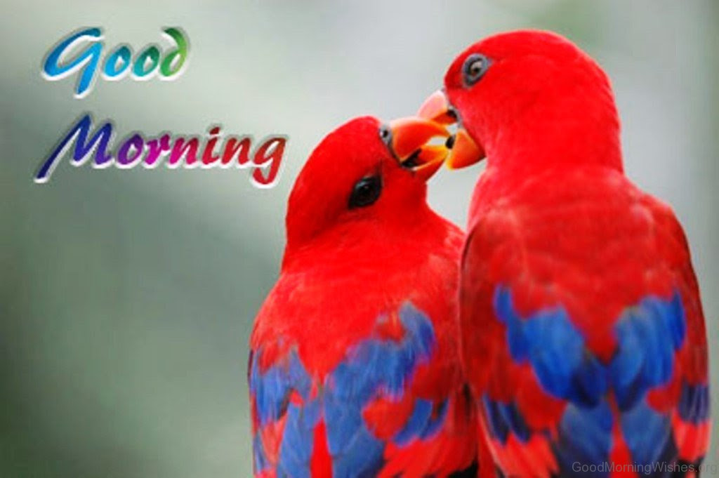 8 Good Morning Pictures Red Bird