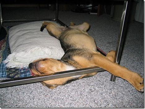 https://urldefense.proofpoint.com/v1/url?u=http://cdn.thebarkpost.com/wp-content/uploads/2014/03/sleeping-puppy-funny_thumb.jpg&k=4+ViHuL0UtSJBpVrYi3EdQ==&r=ycNZpW1TNL35LDeJbnjAJw==&m=fpunlMkeQq4fVhTOcBBoptlRnZOGkdEFdyaykCXaKGc=&s=fe7f66a87664c2a7e67d2b1f9ded6146d1f5c4da71b12825ea6b07b622ce8117