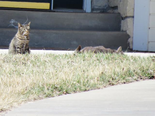 IMG_0907cps Kitties