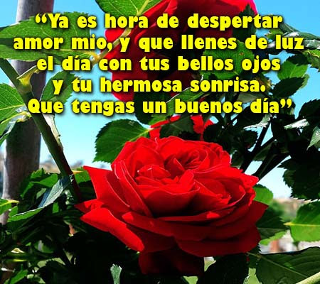 Imagenes De Rosas Con Frases De Buenos Dias Amor Rosas De Amor