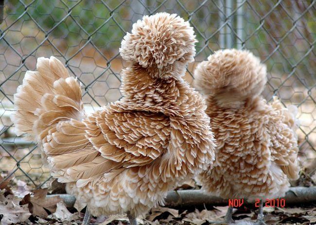 animais-peludos-8-1