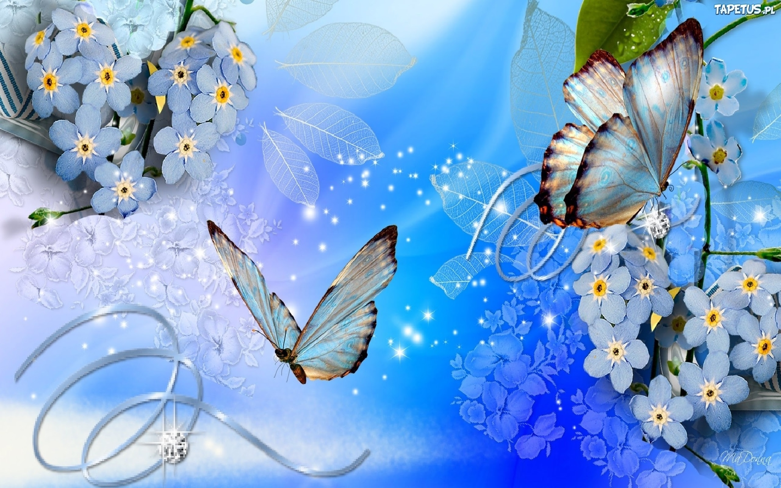 Butterflies And Flowers Background 586 : Wallpapers13.com