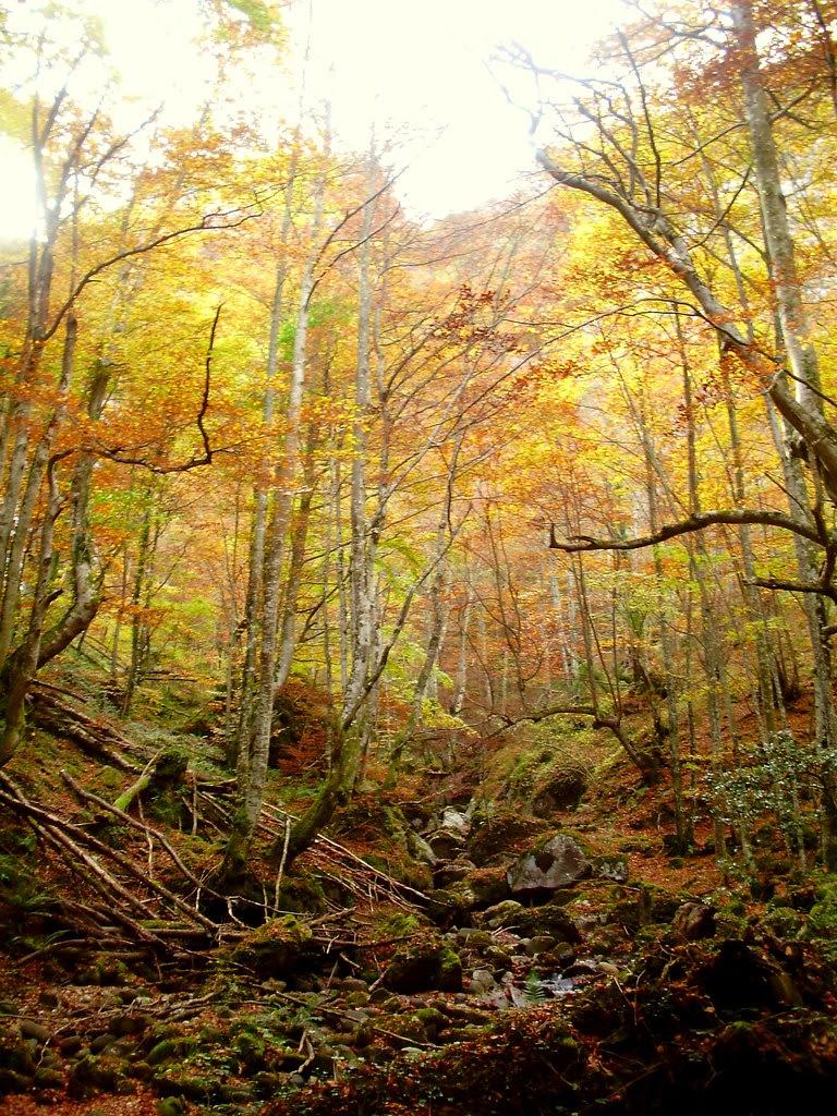 Bosque de Lindes 037
