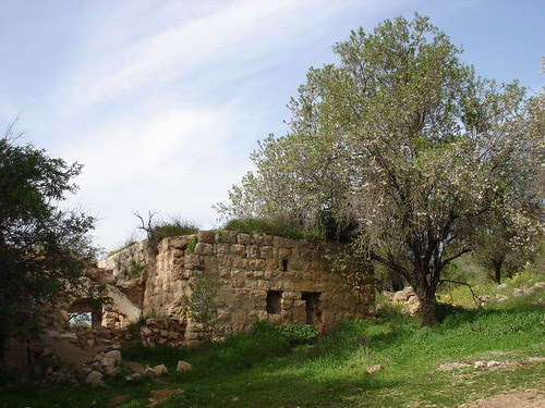 Ruin with tree