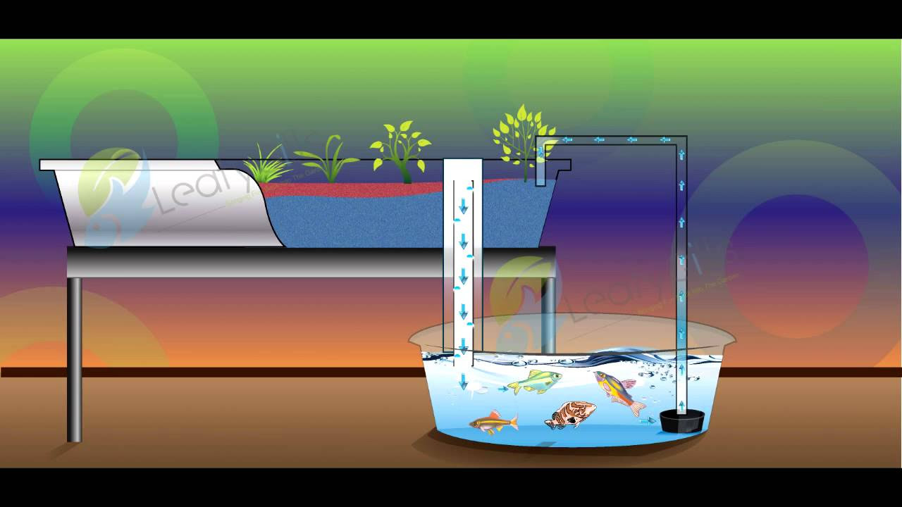 Flood and Drain Systems