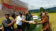 panen bersama petani di Desa Pojok Sari Kecamatan Ambarawa, Kab. Semarang