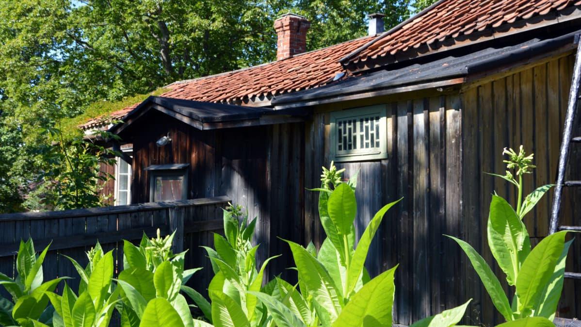 Kuvahaun tulos haulle tupakka museo turku