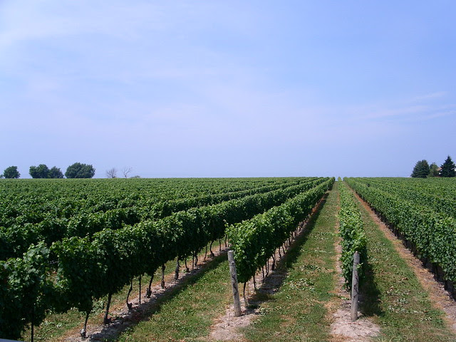 Konzelmann Estate Winery - 20 July 2011 - NiagaraWatch.com