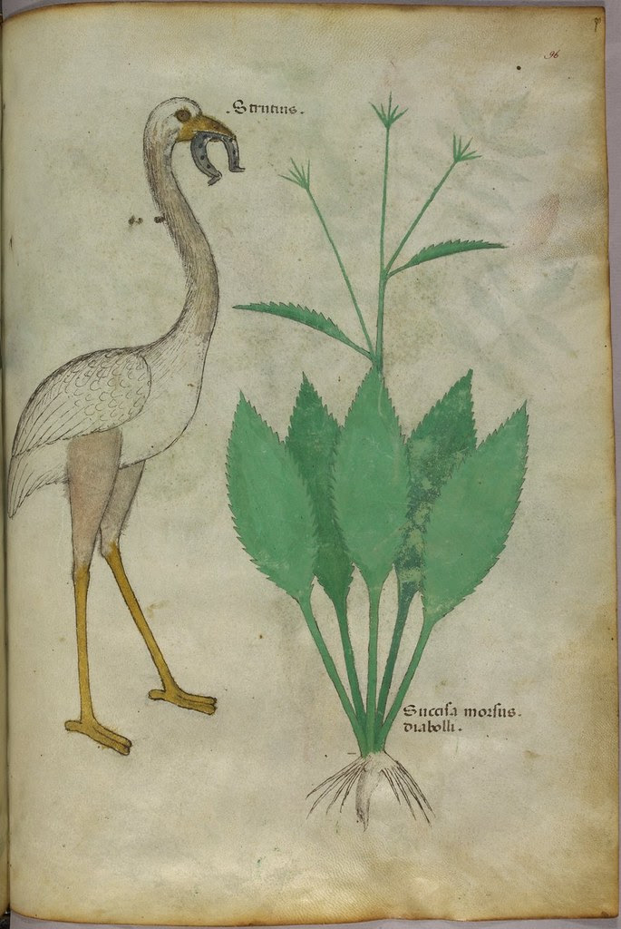 Herbal/bestiary from 1400s
