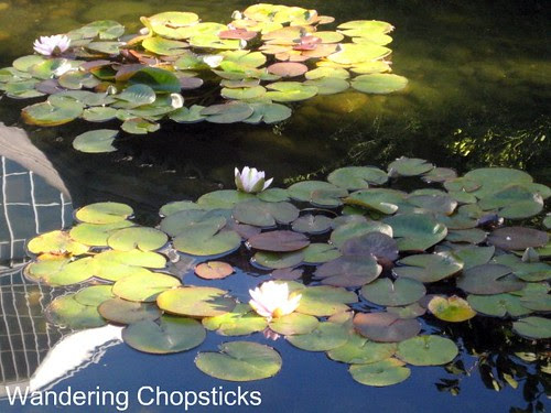 Day 4.12 Lan Su Chinese Garden (Portland Classical Chinese Garden) - Portland - Oregon 25