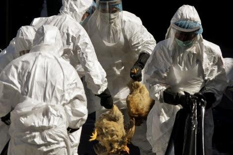 Profesionales sanitarios sacrifican miles de pollos en Hong Kong. | Kin Cheung (AP)