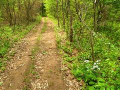 Buzzard's Roost trail