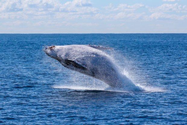 Experience Australian Gold Coast – 5 Best Activities to Do