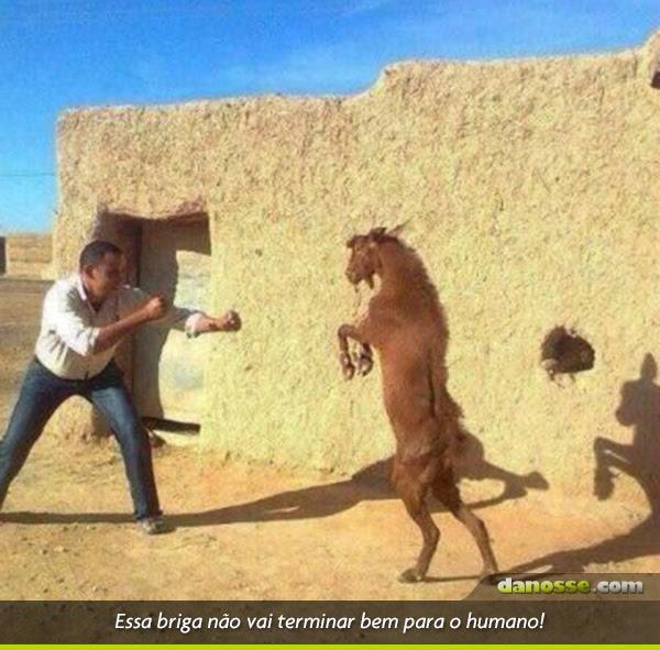 Briga animal!