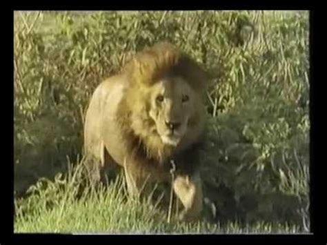 eagle lion armenian nationalist youtube