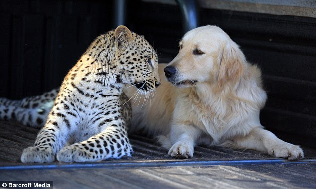 Tommy the dog and Salati the Leopard