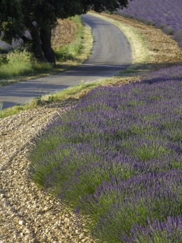 wish to go for long drive...Provence