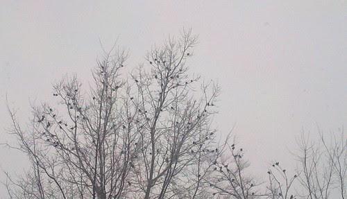 2012-01-13_13-26-08_667