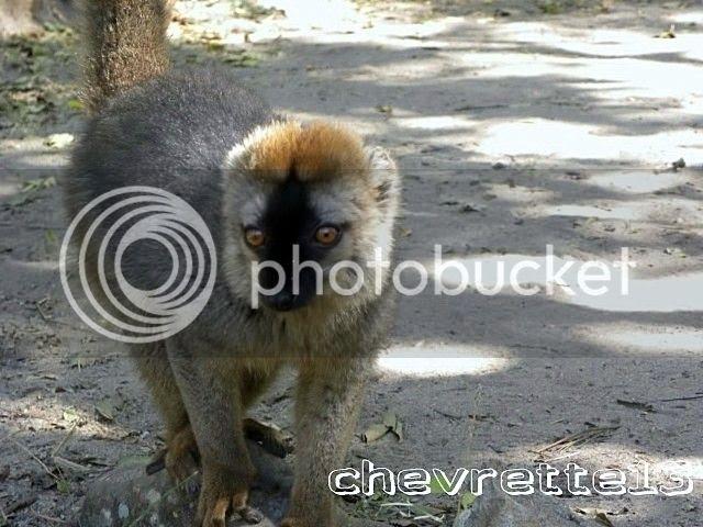 http://i1252.photobucket.com/albums/hh578/chevrette13/Madagascar/DSCN0525640x480_zps95af6a22.jpg