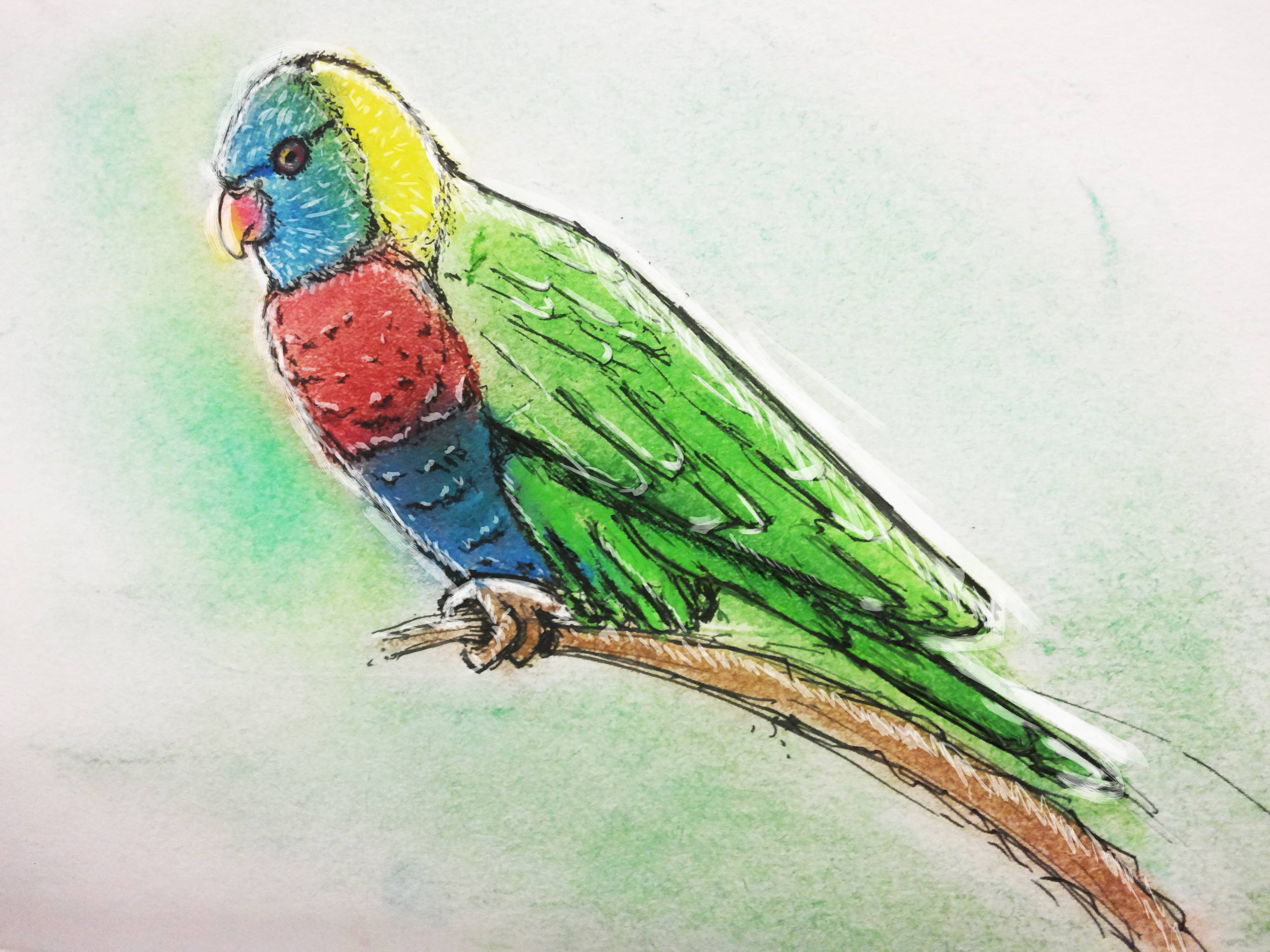 How To Draw A Rainbow Lorikeet Easy Drawing Art Ideas