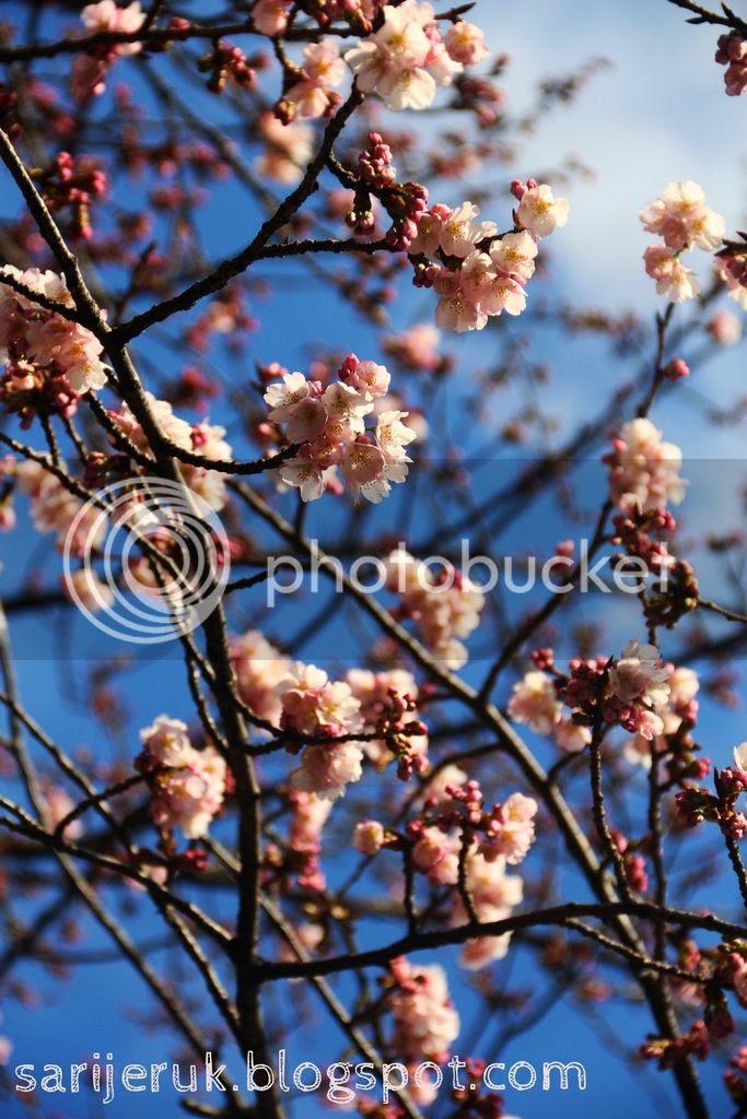photo IMG_0647_zpskuwuhjr2.jpg