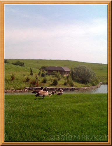 geese2fr