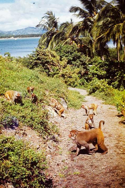 perierga.gr - Monkey Island: Το νησί των πιθήκων!