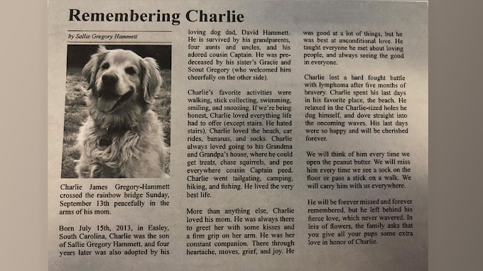 TREND ESSENCE: Dog's obituary melts hearts on Twitter: 'He was the best boy'