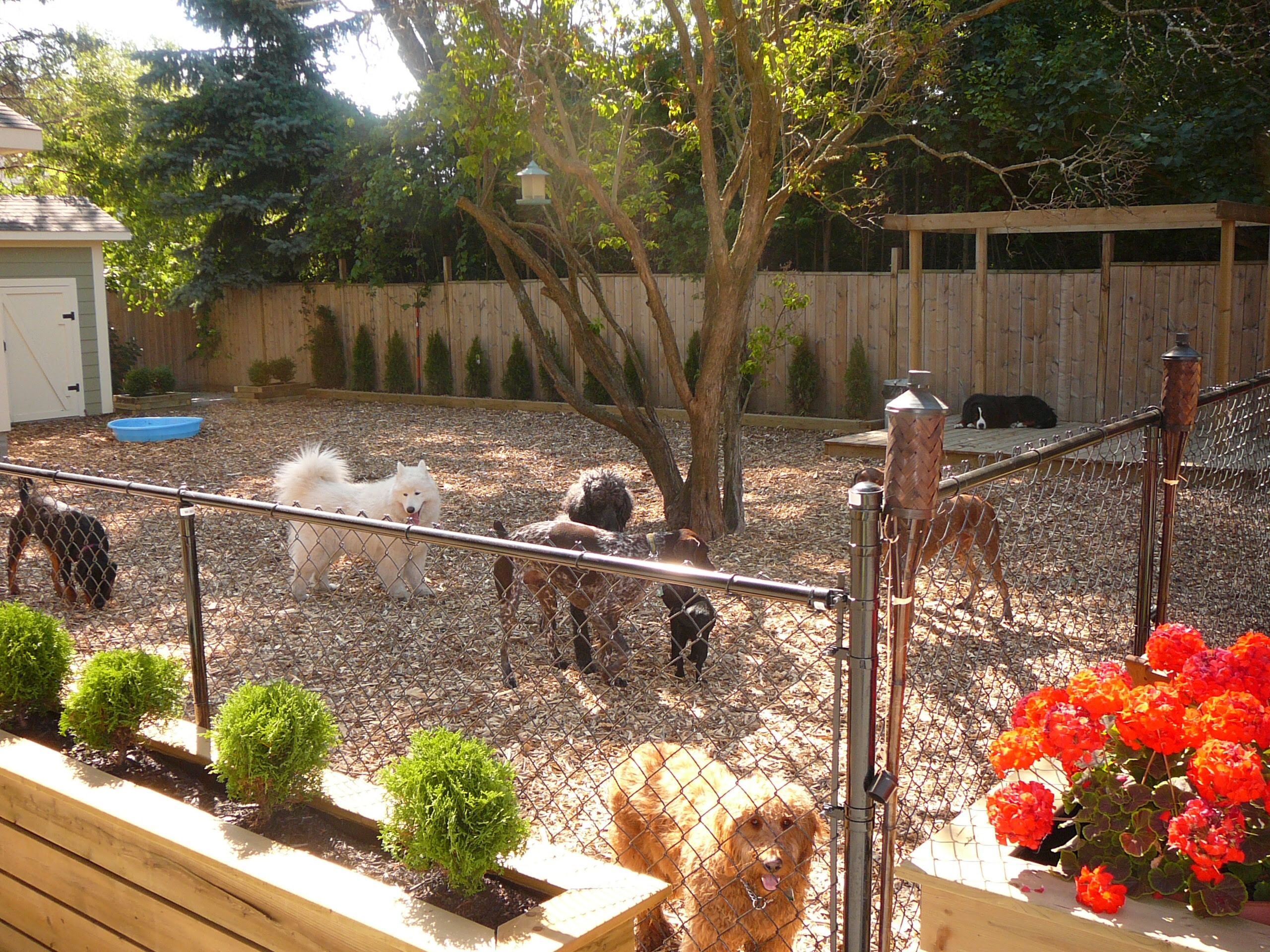 Ideas For Backyard Best Small Backyards With Dogs Deepnot Golime