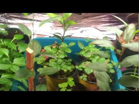 Mini Aquaponics Systems