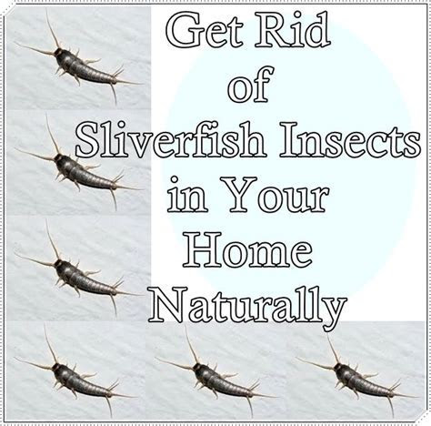 17 Best images about CONTROL OF PESTS BUGS & ? on Pinterest   Homemade, The mosquito and Ants