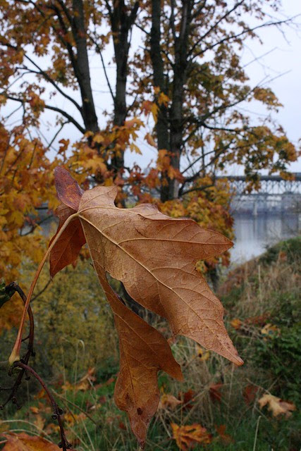 autumn leaf, riverside park