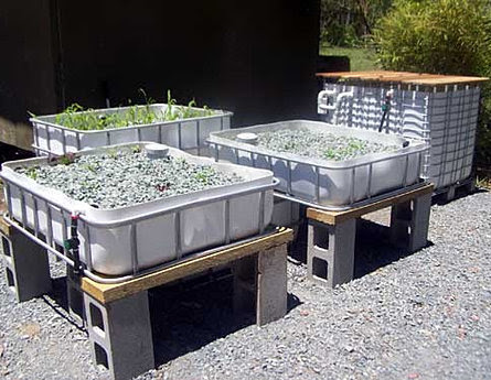 Aquaponics DIY IBC/Toteponics Kit system, used with permission