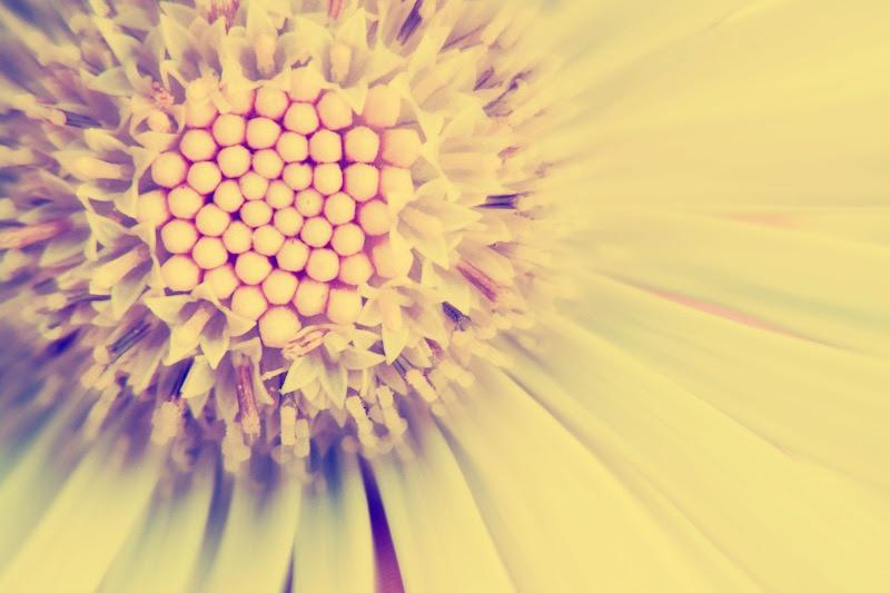 Flower picmonkey