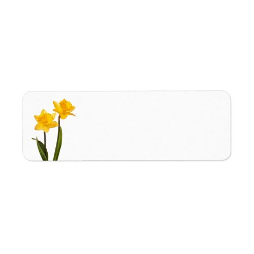 Yellow Daffodils on White - Daffodil Flower Blank Label