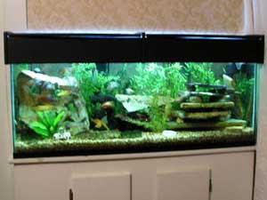 Tropical Fish Tanks - Page 2