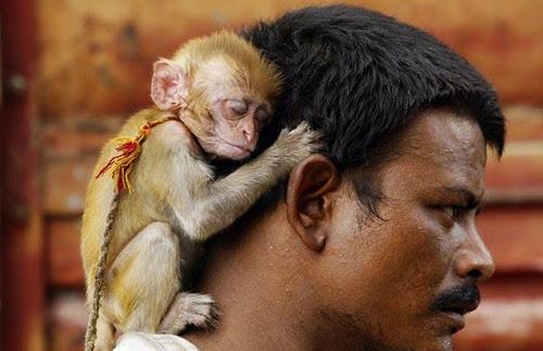 Monkey animal pics week