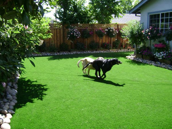 Small Back Yard Landscaping Ideas with Dogs