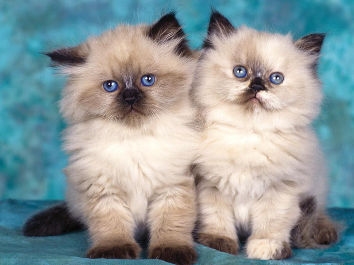 http://25.media.tumblr.com/tumblr_m6utxcoA7y1qdortwo1_1280.jpg#cats%201152x864