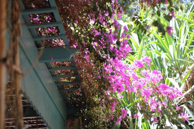 photo 28-jardin majorelle_marrakech-YSL_zpsi5xzouol.jpg