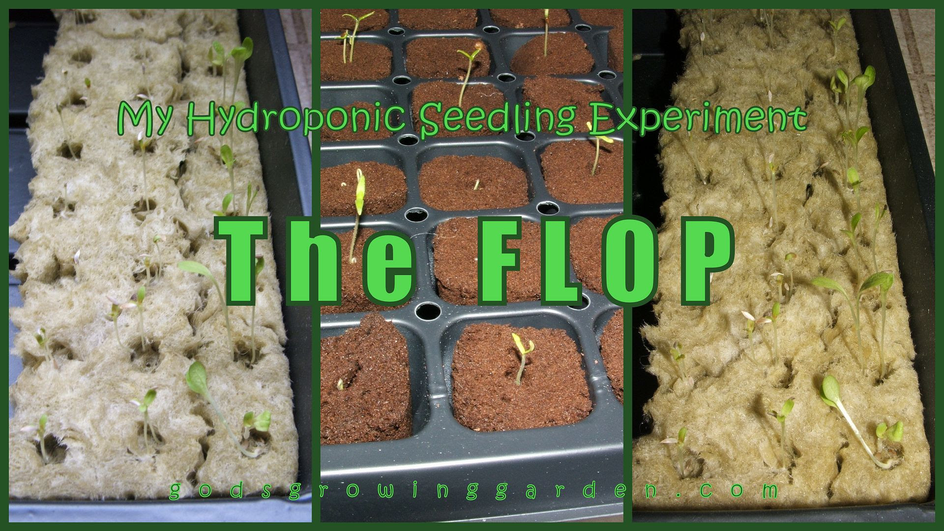 The Flop by Angie Ouellette-Tower for godsgrowinggarden.com photo 2014-03-15_zpsc3c7fe0a.jpg