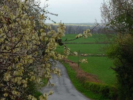 spring2015-sheepnblossoms.jpg