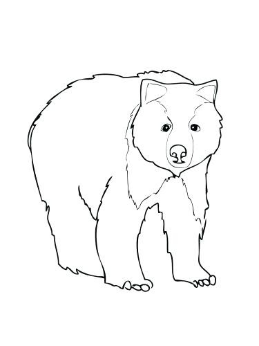 Bear Face Coloring Pages at GetColorings.com | Free ...