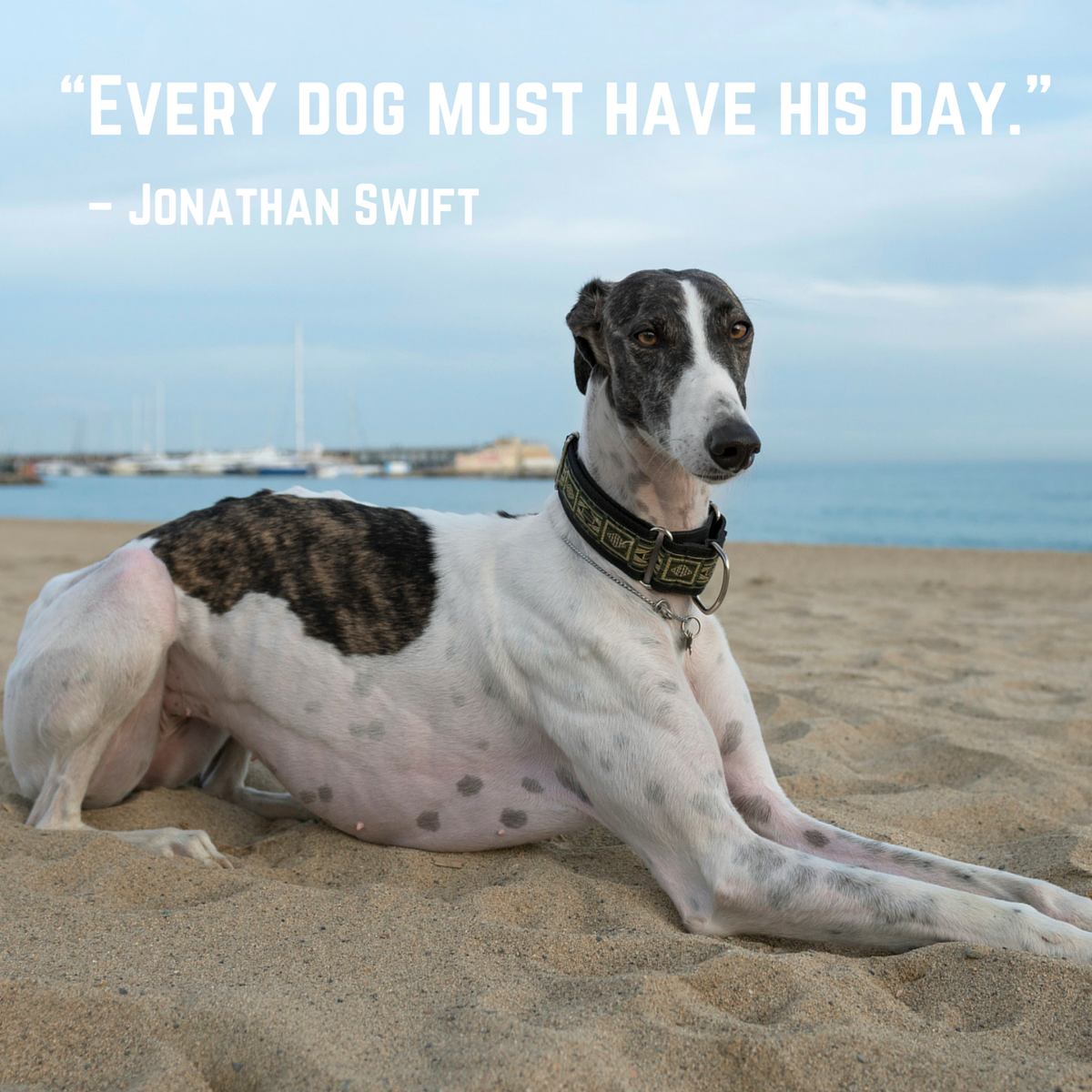 30+ Best Heart-melting Dog Quotes with Beautiful Images ...