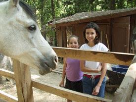 horsekellen22