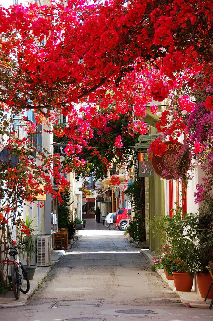 calles-arboles-flores (13)