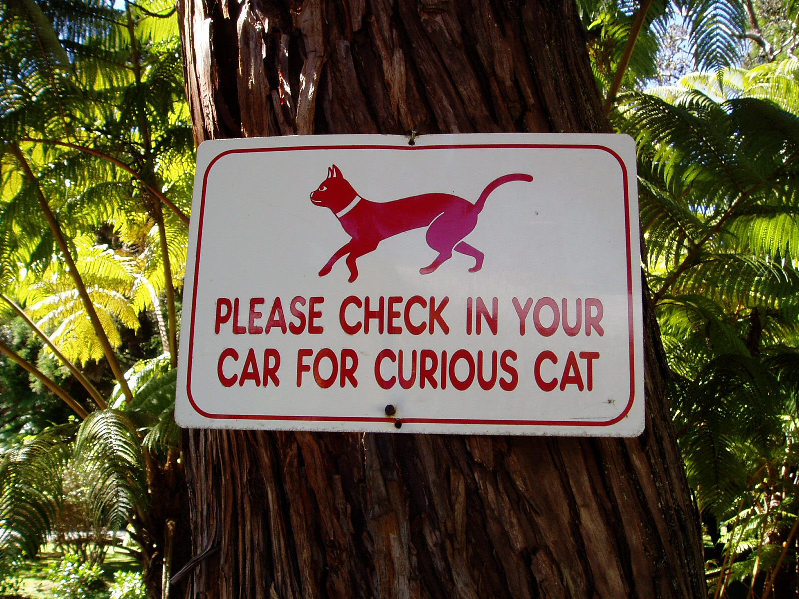 Please check in your car for curious cat