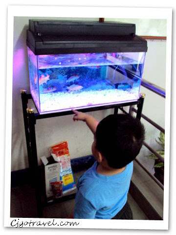 Son and fish