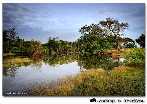 tok jembal pond picture